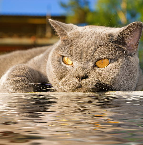Cat lying near the water